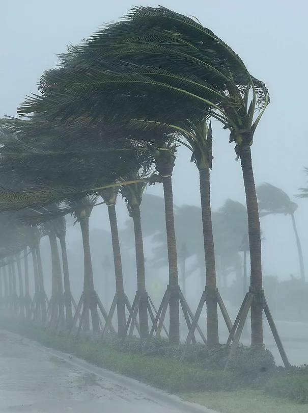 storm-palmtrees